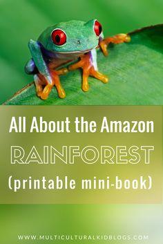 Rainforest Facts For Kids, Rainforest Preschool, Rainforest Crafts, Rainforest Project, Rainforest Habitat, Rainforest Theme, Amazon Rainforest, Rainforest Classroom, Preschool Jungle