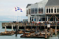 Fisherman's Warf in San Francisco, CA. The sea lions are adorable!