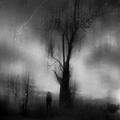 #black forest #nature