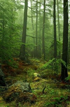 Love this Enchanted forest, need to go there. Love this Enchanted forest, need to go there. Forest Photography, Landscape Photography, Travel Photography, Beautiful Forest, Beautiful Places, Foto 3d, Mystical Forest, Deep Forest, Misty Forest