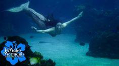 Mermaid Pics, Mermaid Images, Mermaid Pictures, H2o Mermaid Tails, Realistic Mermaid Tails, H2o Mermaids, Bear Wallpaper, Merfolk, Movies And Tv Shows