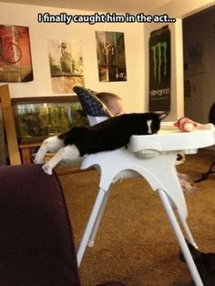 30 Cats That Are Master Thieves -The 30 pictures below prove beyond the shadow of all doubts that cats take whatever they want, and we, their humans