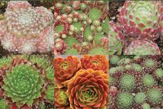 9 Best Succulent Plant Collections images in 2016 | Planting