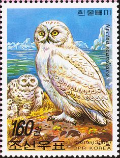 Snowy Owl stamps - mainly images - gallery format