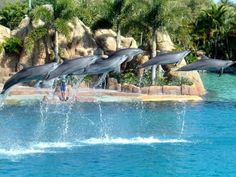 Dolphins doing a cool jump while they swim