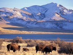 Great Salt Lake at Antelope Island State Park Now I have finally been there. With the family February 2015