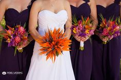 The ideal Birds of Paradise bouquet! Great vibrant orange and purple-blue colors! Tropical Wedding Bouquets, Flower Bouquet Wedding, Purple Wedding, Wedding Colors, Dream Wedding, Bird Of Paradise Wedding, Birds Of Paradise Flower, Maui Weddings, Hawaii Wedding