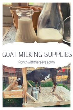 I have had dairy goats for over 3 years now, and I have absolutely loved them! They are so fun, so sweet, and have many benefits.  A big one is the amount of milk they give! Show Goats, Goat Care, Raising Goats, Goat Milk, Livestock, Cattle, Farm Animals, 3 Years, Poultry