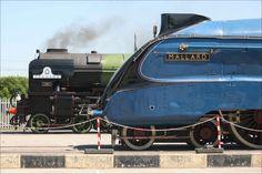 Tornado and Mallard at the NRM. Photo © National Railway Museum and Kippa Matthews Mallard Train, Severn Valley, National Railway Museum, Steam Engine, Steam Locomotive, Historical Pictures, Dieselpunk, Trains, A4