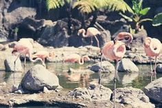 I love flamingoes so much.