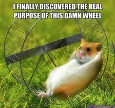 Image result for cute hamsters