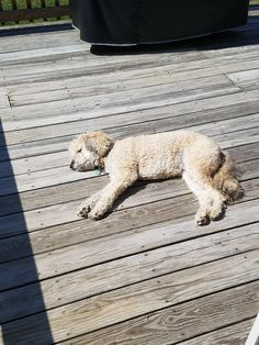 During the spring and summer she likes to sun bathe on our deck http://ift.tt/2nRIByb