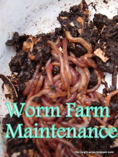 This looks so gross, but I know worms would be great for the soil and for the chickens!
