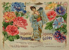 Seed Catalogs from Smithsonian Institution Libraries Imperial Japanese Morning Glories