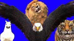 Finger Family Rhyme - EAGLE,TIGER,HORSE,LION Version | Funny  Children P...