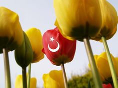 Istanbul Polls: What is the symbol of Istanbul? Turkey Flag, Istanbul Travel, Martini, Stuffed Peppers, Vegetables, Pictures, Travel Guide, Holland, Wallpaper