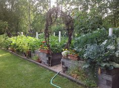 2014 Hermlottie Gardens!! It keeps getting bigger.