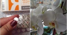 Po tomto prípravku vám budú orchidey rásť ako o život! Už ich pomaly nemám kam dávať Homemade, Flowers, Beauty, Garden, Youtube, House, Ideas, Garten, Home Made