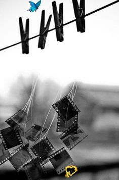 What Does Your Daily Schedule Say About Your Love Life? Beautiful black and white photography [ CandaceWilsonArtS... ]<br> YAY:):):) Black Image, Photo Black, Black White Photos, Black And White Photography, Macro Photographers, Central Park Weddings, Monthly Baby Photos, Carlos Castaneda, Photo Negative