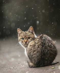 Even in the snowy cold, she waits dutifully.....