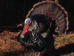 10 Tips to Take The Toughest Turkeys