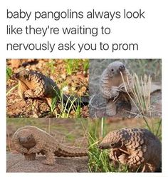 Funny animal memes of the day. Check these top 24 hilarious animal memes to make you laugh on bad days. Funny Animal Memes, Cute Funny Animals, Funny Animal Pictures, Cute Baby Animals, Funny Cute, Best Funny Pictures, Funny Photos, The Funny, Animal Pics