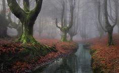 Parece un bosque de Zelda, no? Sí existe, es el Bosque Otzarreta, País Vasco, España