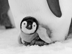 Beautiful Black and White Animals Photos on Snow