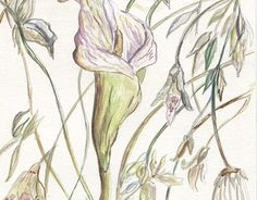 "Check out new work on my @Behance portfolio: ""Botanical Watercolor"" http://be.net/gallery/49667431/Botanical-Watercolor"