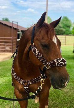 Western Horse Tack, Horse Barns, Western Saddles, Horse Stalls, Western Saddle Pads, Horse Horse, Cute Horses, Beautiful Horses, Horse Gear