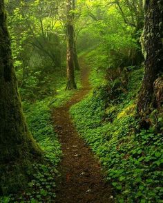 🇺🇸 Hobbit Trail 2 (Oregon coastal forest) by Jeff Hobson on 🌲 Beautiful World, Beautiful Places, Natures Path, Forest Path, Magic Forest, Walk In The Woods, Pathways, Amazing Nature, Nature Photos