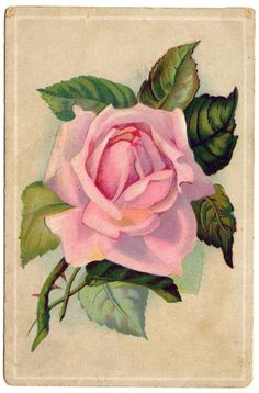 Vintage Image - Really Lovely Pink Rose Card - The Graphics Fairy