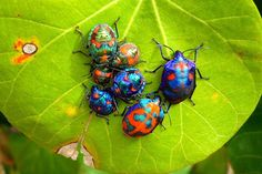 Colorful bugs. wow they are colorful!
