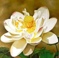 Ora Sorensen   OIL   Lotus