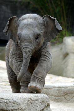 Elephant, So Cute
