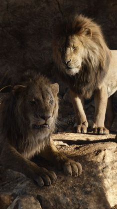 Mufasa and simba Scar And Mufasa, Scar Lion King, Lion King Fan Art, Simba And Nala, Lion King Simba, Disney Lion King, 3d Wallpaper Lion, Lion Africa, Lion King Pictures