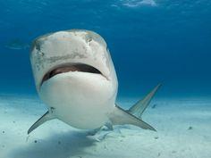 La conservación del tiburón