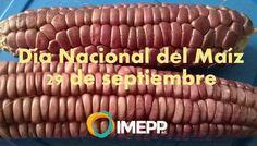 Continuamos con los festejos de este 29 de septiembre queremos recordarte que hoy es el Día Nacional del Maíz que es el principal sustento de las y los mexicanos protejamos su diversidad. No a la siembra de maíz transgénico en México!