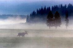 Si eres un amante de la vida salvaje, este lugar es el indicado para ti...Bienvenido al El Parque Nacional Yellowstone, el primer Parque Nacional del mundo