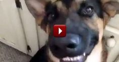 They Aren't Human, But These Animals Certainly Think They Are - Cutest Compilation Mary Mays, www.marymays.wakeupnow.com