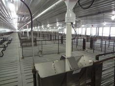 Talk about pig comfort! Hog Farm, Baby Pigs, Animal Welfare, Barn, Amazing, Places, Life, Home Decor, Piglets