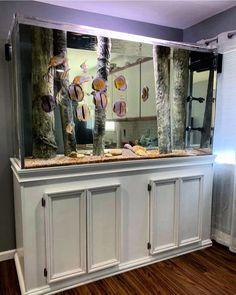 Aquadecor's standing logs Diskus Aquarium, Cichlid Aquarium, Marine Aquarium, Aquarium Ideas, Discus Tank, Discus Fish, Malawi Cichlids, African Cichlids, South American Cichlids