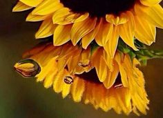 The beauty you see in me is a reflection of you... - Rumi