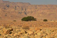 Частный гид в Израиле: Удивительная находка израильских археологов