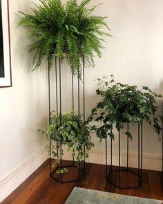 Home Decorating Tips On A Budget Indoor Garden, Indoor Plants, Garden Bed, Decoration Plante, House Plants Decor, Interior Plants, Plant Shelves, Hanging Plants, Planting Flowers