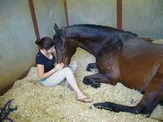 gadis bernafsu, kuda dipaksa melakukan itu