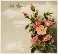 Pretty Pink Roses and Birds Image! - The Graphics Fairy