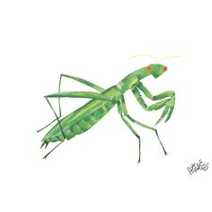Eric Carle The Very Quiet Cricket Character Art Mantis Print