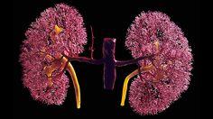 New drug may help diabetic kidney disease patients. #diabetes #therapy   everydayhealth.com