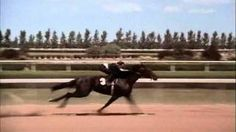 The Black Stallion Race Rescored Whit Return To Snowy River Music Black Stallion Movie, Horse World, Beautiful Horses, Racing, River, Music, Movies, Animals, Google Search